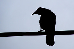 """A Raven´s Shadow Theatre 1"""